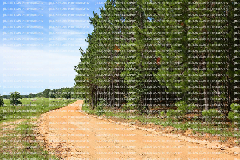 Curved dirt road with farmland on the left and tall pine trees on the right in rural Georgia, USA.