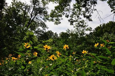 Sunned Flowers