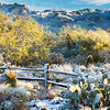 Sabino Canyon Snow