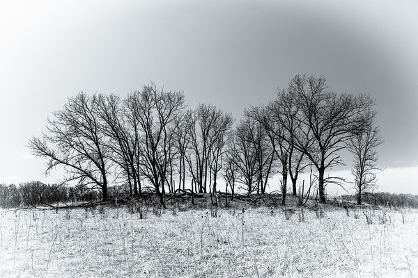 An Island of Prairie Trees
