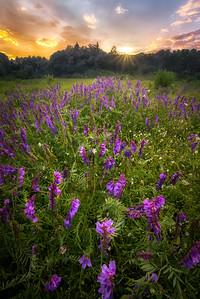 Wiggin Wildflowers