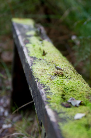 Moss covered bench