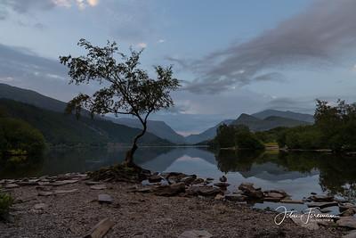 Lonesone tree, Llyn Padarn
