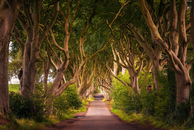 The Dark Hedges in Northern Ireland at sunset