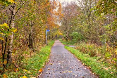 Long Twisty Path through Forrest