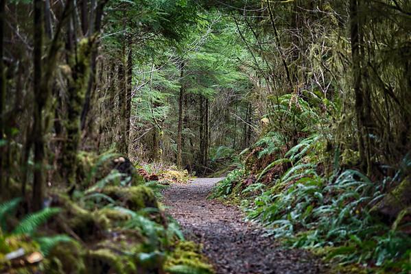 Rainforest trail - Quinalt