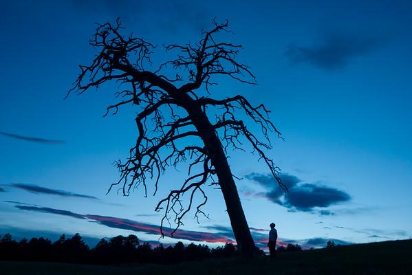 Dead Tree, Elbert, Colorado