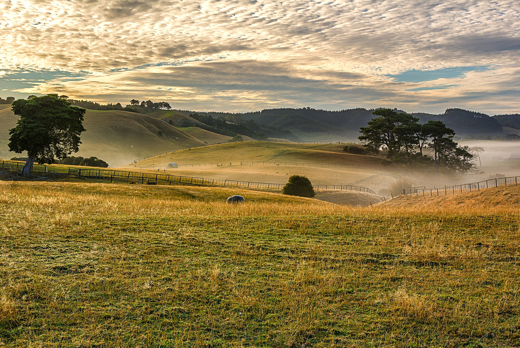 Misty Pastures, Beachlands, Auckland, New Zealand