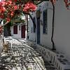 Bougainvillea Street