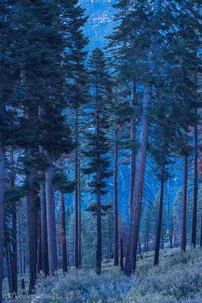 Yosemite Blue Hour 1