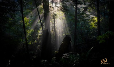Rays in a Rainforest