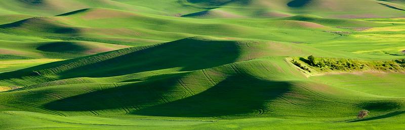 Green dunes, Palouse