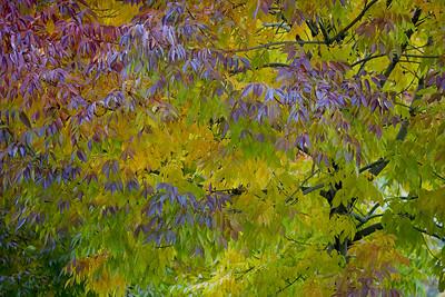 Painterly Fall
