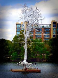 Silver Tree T-Lake-2