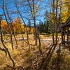 Cabin in Aspens Pano 6335