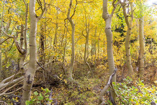 Deadman Creek Fall Colors - Sonora Pass-6