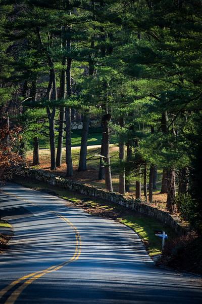 Sentinel Pines on Wildwood Road