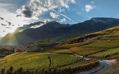Sunny Vineyards