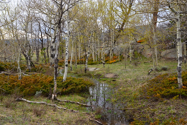 Spring Stream (up) Vedauwoo