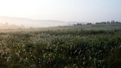 Morning Mist III