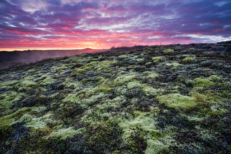 Mossy Lava Field, North Iceland