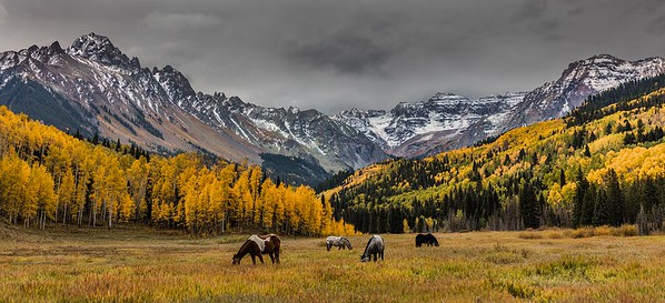 SEASON'S LAST GRAZE – September, 2016, Ridgeway, Colorado