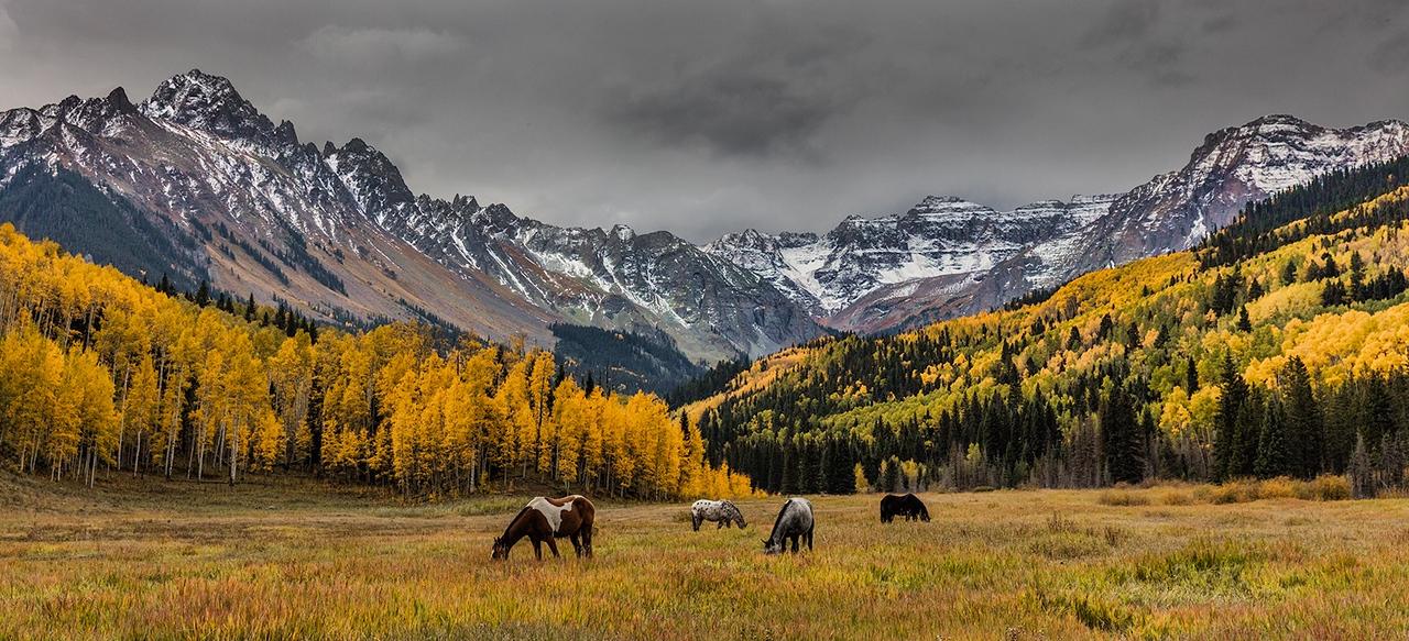 SEASON'S LAST GRAZE – September, 2016, Ridgeway, Colorado