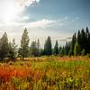 Colorado Wilderness