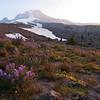 Oregon Mountain Wildflowers