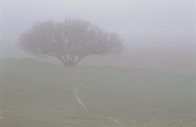 Fog, Warner Ranch, Ca