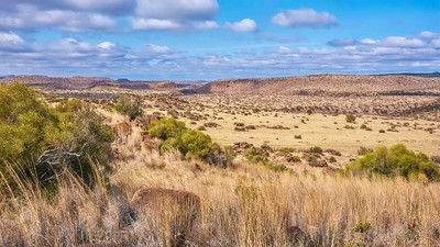 A panoramic view of a typical landscape in the Great Karoo region in South Africa, including its flat topped hills known as Karoo Koppies.