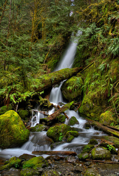 Bunch Falls near Lake Quinault on the Olympic Peninsula