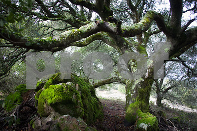 Day #20 - Mossy Tree