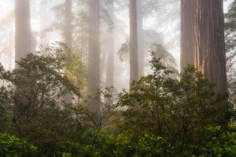 Misty Shadows
