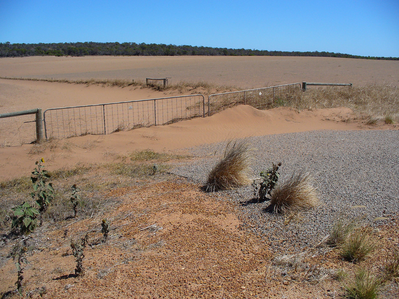 Drought ravaged paddocks near home, march 2007
