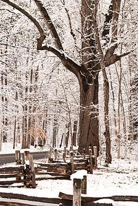 The Oak on Old Battleground Rd.