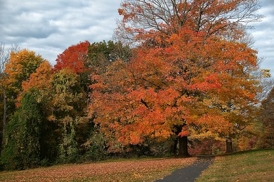 Fall @ FDR State Park
