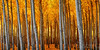 Landscape101_10x20