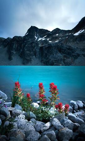 Alpine Bloom