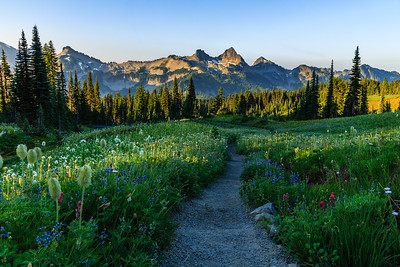 Mazama Ridge Trail