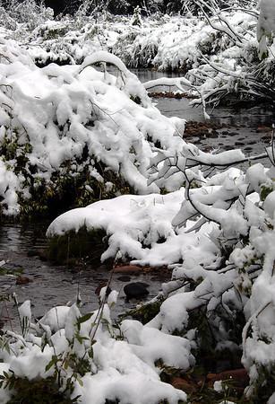 Early Snow - Rawah Valley, Colorado