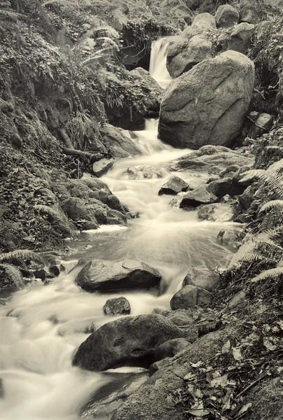 Monarch Creek, Study 2, Sea Ranch, California