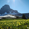 Glacier Lilies Soaking up the Sunshine
