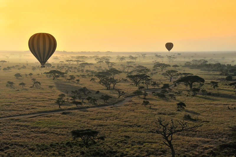 Hot Air Balloons At Sunrise Over the Serengeti, Tanzania, East Africa