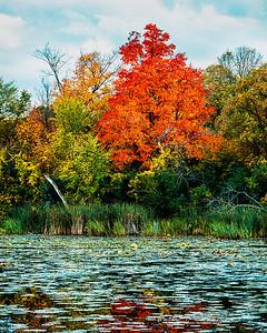 Woods & Wetland