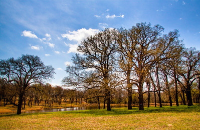 Deep Creek Field of Trees