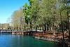 Cypress trees at beautiful Lake Eola in Orlando, Florida, USA.