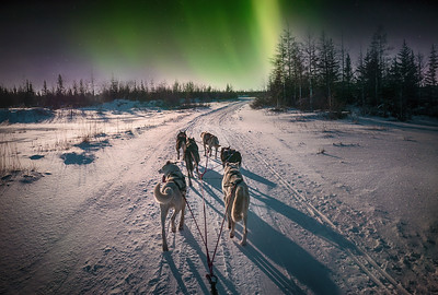 A team of sled dogs running on a snowy trail with Northern Lights in the background sky.