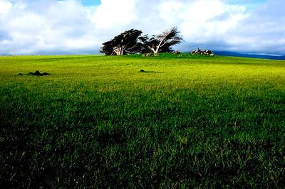 Trees- Invercargill, New Zealand