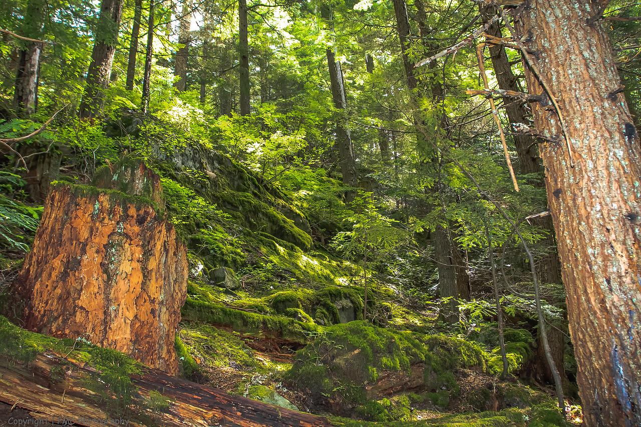 Valley Trail, Whistler, BC